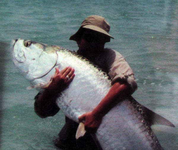Fishing - Tarpon